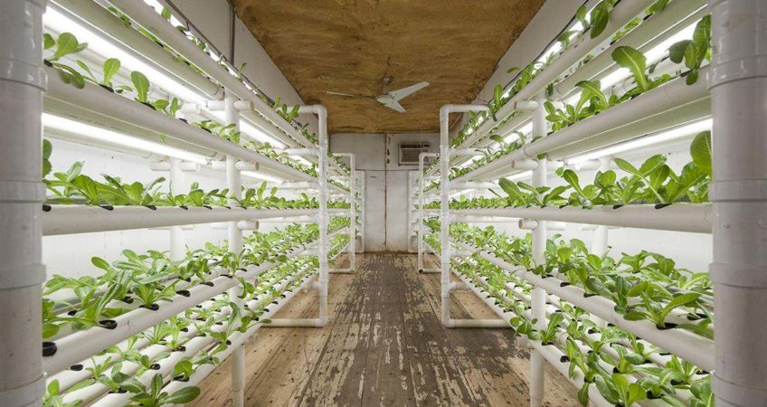 Shipping Container Food Growing